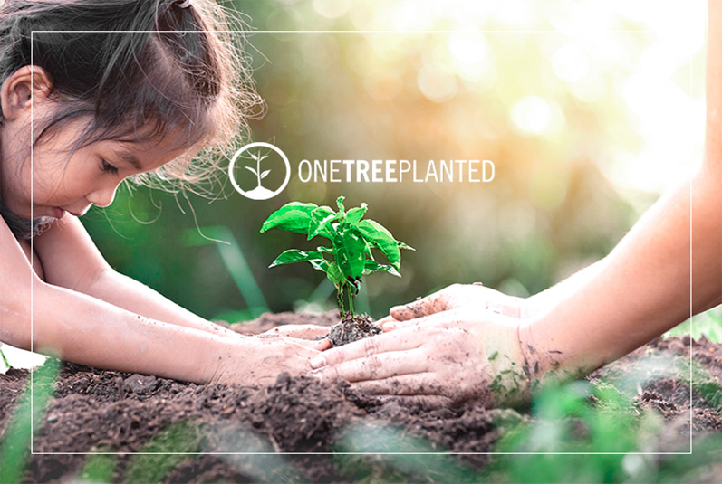 shebd ontree planted